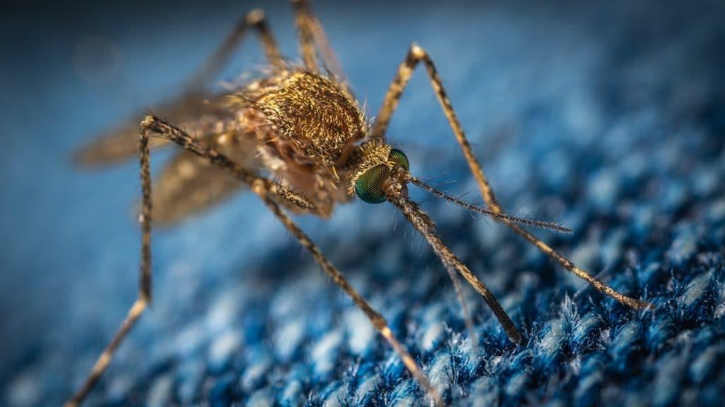 Recette anti-moustique